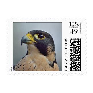 Majestic Peregrine falcon Postage Stamp