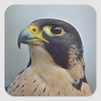 Majestic Peregrine falcon Square Sticker