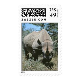Majestic Rhino Stamp