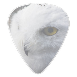 majestic snowy owl 2 sided guitar pick