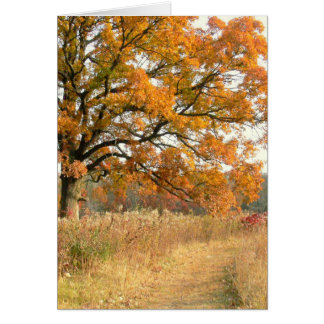"""""""MAJESTIC TREE ALONG THE WOODLAND PATH IN FALL"""" CARD"""