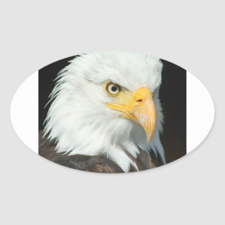 Majestic white and brown Bald Eagle posing Oval Sticker