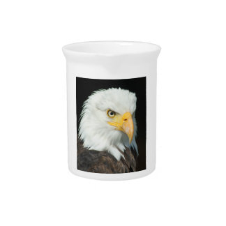 Majestic white and brown Bald Eagle posing Pitcher