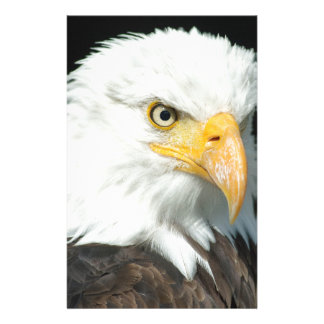 Majestic white and brown Bald Eagle posing Stationery
