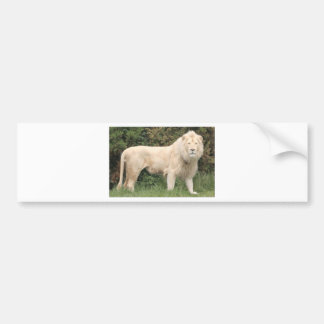 Majestic White Lion Bumper Sticker