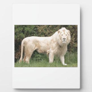 Majestic White Lion Plaque