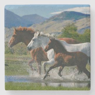 Majestic wild horses stone coaster