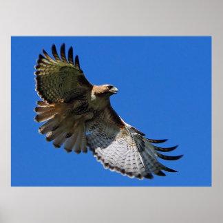 Majestic Wings Framed Print