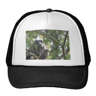 Majestic Wonder Mesh Hats