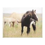 Majesty, Legend of Steens Stretched Canvas Prints