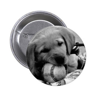 Major League Puppy Button