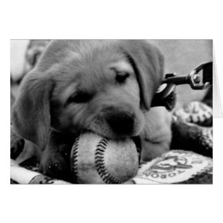 Major League Puppy - Greeting Note Cards