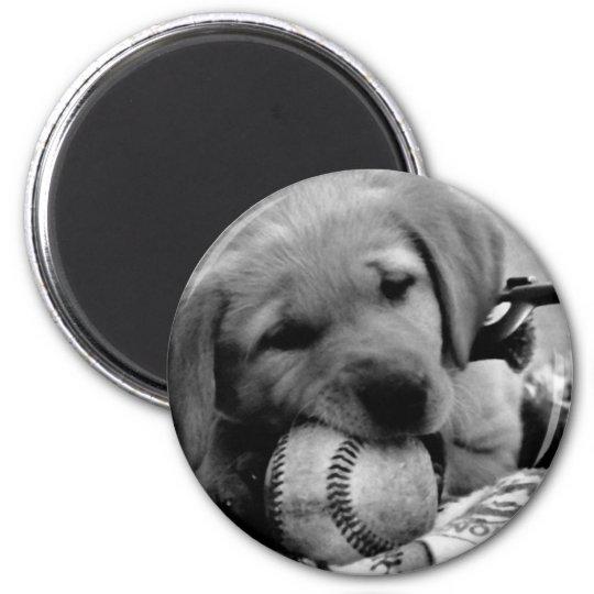 Major League Puppy Magnet