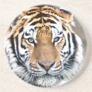 Makari Tiger Confidence peace and power Beverage Coasters