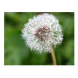 Make A Wish! Dandelion Postcards