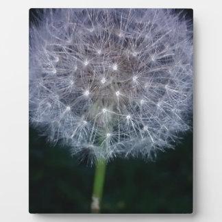 make a wish plaque