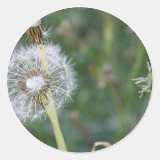 Make a Wish Round Sticker