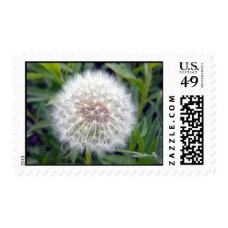 Make A Wish Stamp