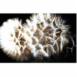 "Make a Wish Statuette<br><div class=""desc"">Close up of dandelion</div>"