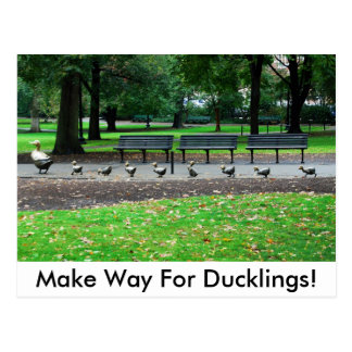 Make Way For Ducklings! Post Card
