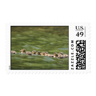Make Way for Ducklings! Postage Stamp
