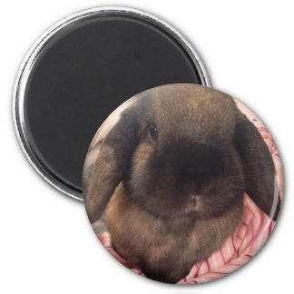 Make your day special with a little fur face! magnet