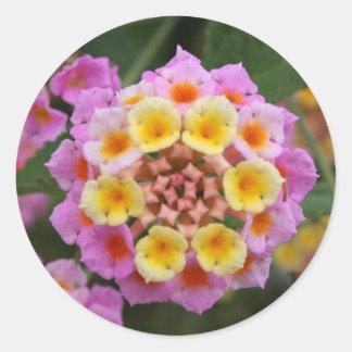 Makro: Pink and Yellow Lantana Flower Classic Round Sticker