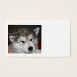 mal puppy 2.png business card
