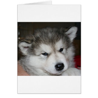 mal puppy 2.png card