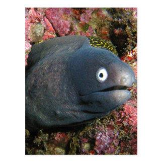 Mala anguila del chiste postales