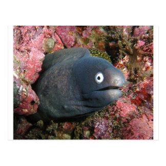 Mala anguila del chiste tarjetas postales