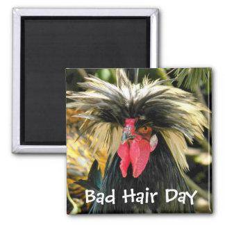 Mala foto del pollo del día del pelo imán cuadrado