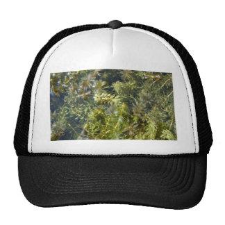 """Mala hierba de charca (o, """"charca enorme Plantlife Gorras"""