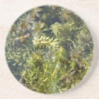 """Mala hierba de charca (o, """"charca enorme Plantlife Posavasos Diseño"""