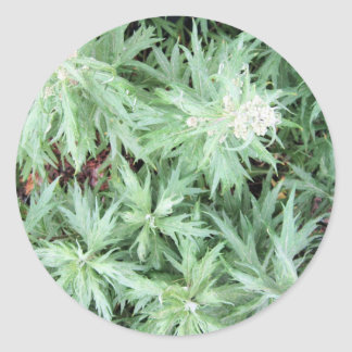 mala hierba del hedor pegatina redonda