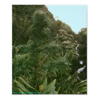 ¿Mala hierba Maui Wowie de Hawaii? Arte Fotografico