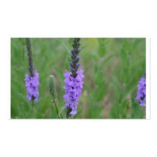 Mala hierba púrpura del palillo en un campo tarjetas de visita