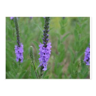 Mala hierba púrpura del palillo en un campo tarjetas de visita grandes