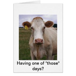 Mala vaca del día tarjeta de felicitación