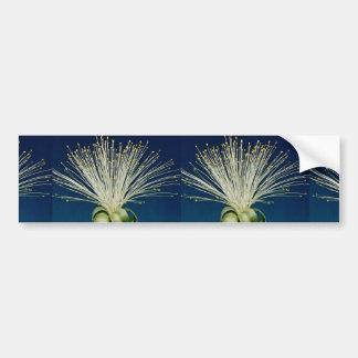 Malabar chestnut pachira aquatica bumper sticker