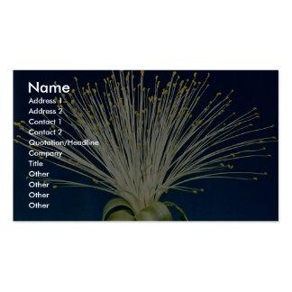 Malabar chestnut pachira aquatica business cards