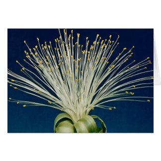 Malabar chestnut pachira aquatica greeting card