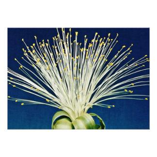 Malabar chestnut pachira aquatica flowers personalized invitation