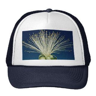 Malabar chestnut pachira aquatica mesh hats