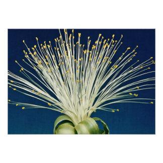 Malabar chestnut pachira aquatica personalized invitation