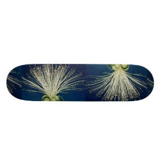 Malabar chestnut pachira aquatica skateboard decks