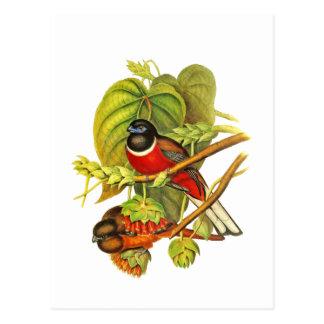Malabar Trogon Post Card