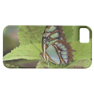Malachite butterfly (Metamorpha stelenes) iPhone 5 Covers