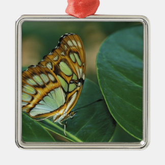 Malachite Butterfly, Siproeta stelenes, Christmas Tree Ornaments
