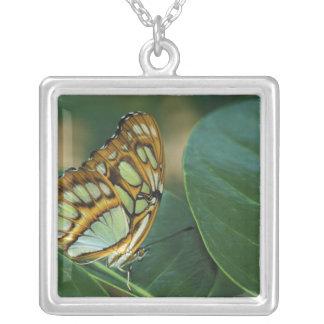 Malachite Butterfly, Siproeta stelenes, Square Pendant Necklace